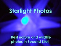 Starlight Photo
