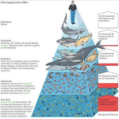 der stoffkreislauf in einem ökosystem