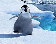 Still from Happy Feet