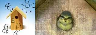 BBC artist/s - Give a Bird a Home (2007) plus photo of Baby Blue Tit
