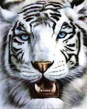 Tigre de ojos azules