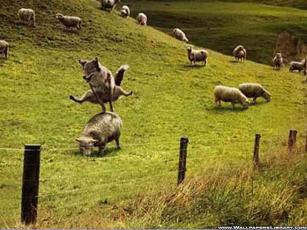 http://2.bp.blogspot.com/_kK8cyC25aK8/TTSLrj1VjcI/AAAAAAAAAPQ/95n1mWbLMyY/s1600/funny-wolf-and-sheeps-wallpaper.jpg