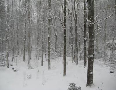 snow haze lifts, snowy forest