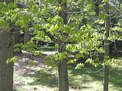 spring leaves CU