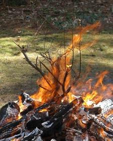 fire branch 5