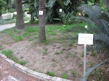 No Jardim Botânico