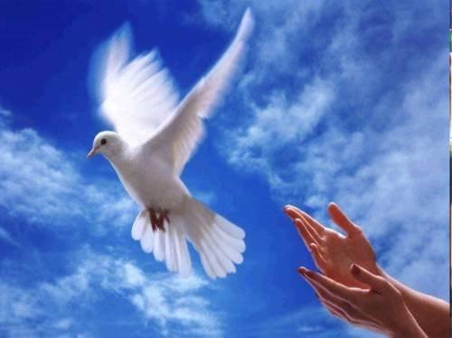 A Paz No Planeta