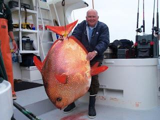 Ανακαλύφθηκε το πρώτο πλήρως θερμόαιμο ψάρι