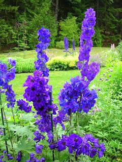 Fun Blue Delphinium Flower