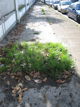WEEDS ON SAGRADO'S SIDEWALK