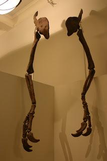 DEINOCHEIRUS forelimbs