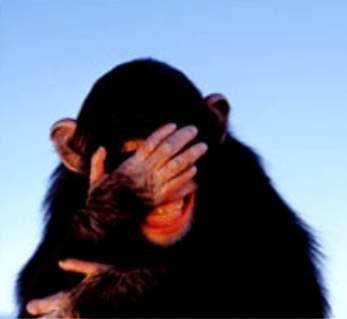 http://2.bp.blogspot.com/_kRuD6zV4Fqs/TNDD5gQJLZI/AAAAAAAAF3w/DmIHZlcPf8g/s400/embarrassed-chimpanzee.jpg