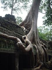 """Ta Prohm (the """"Jungle Temple"""")"""
