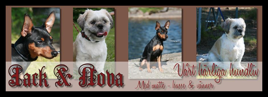 Jack & Novas härliga hundliv