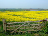 The countryside is a blaze of yellow