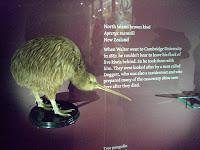 Kiwi display