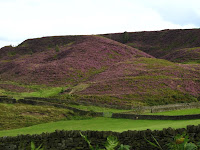 Heather covered hills