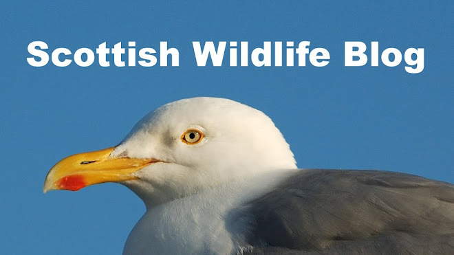 Scottish Wildlife Blog