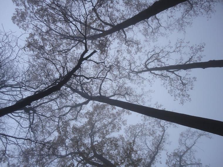 Bomen fluisteren