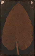 """Leaf"" (c. 1802) photogenic drawing / photogram"