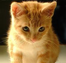 Miauuu?