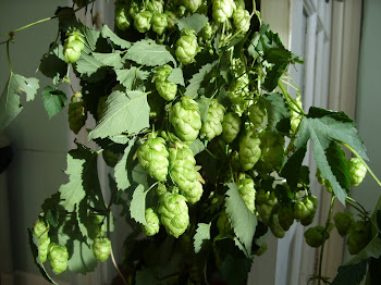 Malarkey Hops