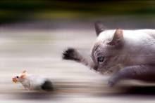 Ce que tu ne vois pas, c'est que la souris lui a volé de la nourriture!