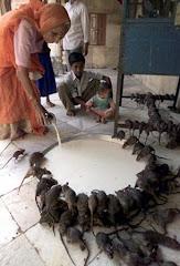 Je ne crois pas que ça se passe ailleurs qu'en Inde...