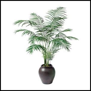 Plantas  recomendadas para purificar ambientes de estudio