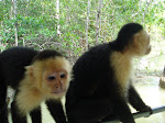 Monkey Tour