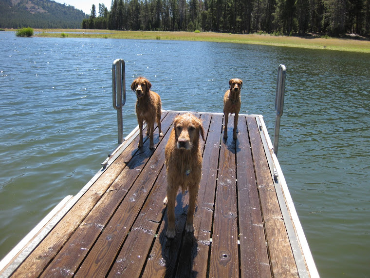 Ready for more Swim Time! C'mon! Throw us something!