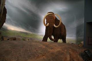 Woolly Mammoth at the Royal BC Museum