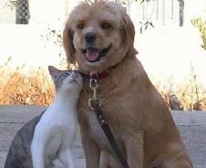 Nunca abandone seu cão ou gato !