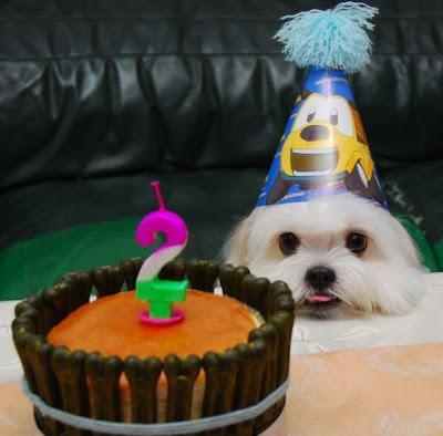 Dog puppy birthday celebration pics