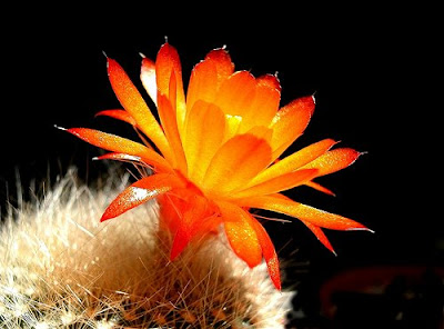 Orange Color Single Flower picture