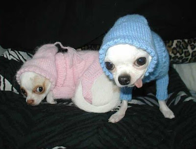 Two dogs wearing the dress
