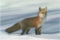F animal - Fox, F for Fox clipart