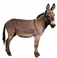 D-animal-Donkey, D for Donkey wallpapers