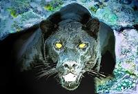 b-animal black panther, b-for black panther pics