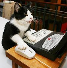 kucing main komputer