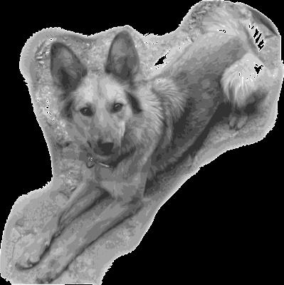 Mi perra Yeñé vectorizada según el segundo seteo