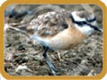 Σπάνια είδη -  Rare Birds