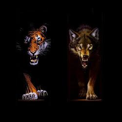 srigala feat harimau