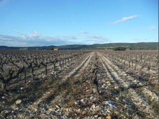Vignoble du Château d'Aigueville
