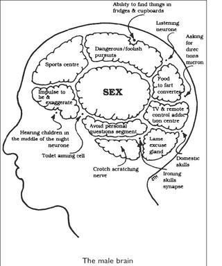 განსხვავება მამაკაცისა და ქალის ტვინს შორის