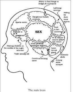 men s brains vs women s brains In 2000, cahill scanned the brains of men and women viewing either highly  aversive  levels differ strongly at specific sites in male versus female mice's  brains.