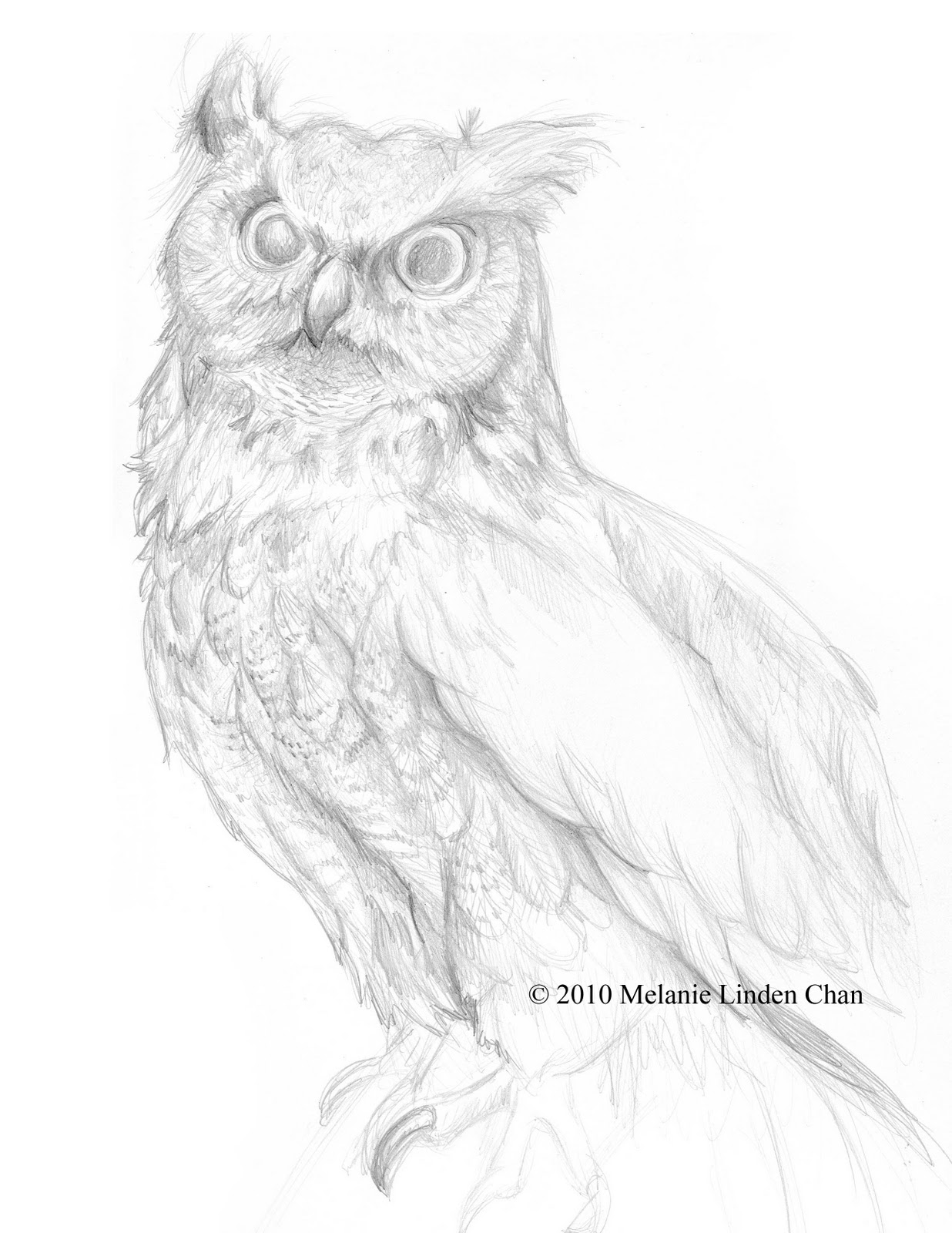owl drawing outline cake ideas and designs