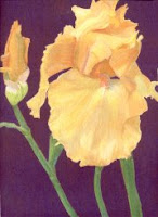r.atencio-orange-yellow-iris