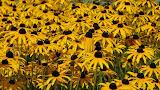 Цветы в Вавельском соборе в Кракове by TripBY.info