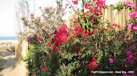 цветы, мертвое море, tripby, Израиль